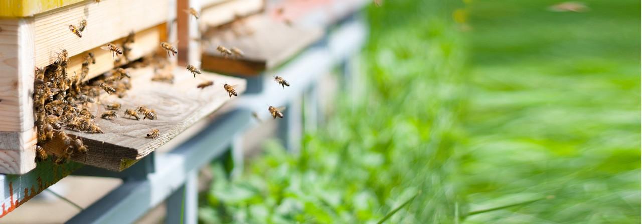 Soutient recherche préservation abeilles