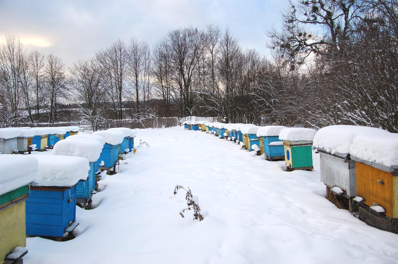 ruche neige BD shutterstock_98454359