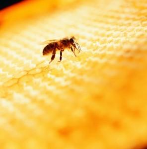 abeille étiquette ICA Suede